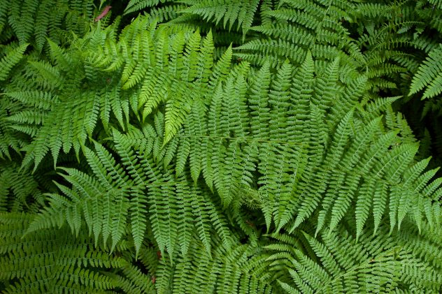 Signal to Noise: Fern